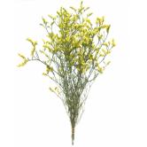 Лимониум
