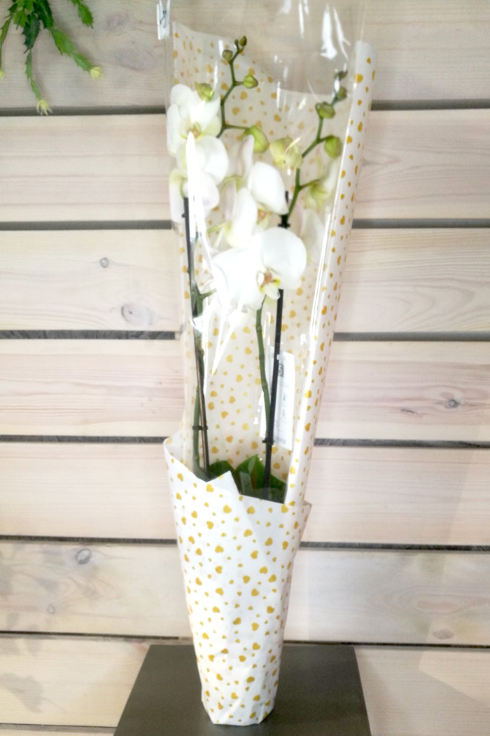 Орхидея в оформлении