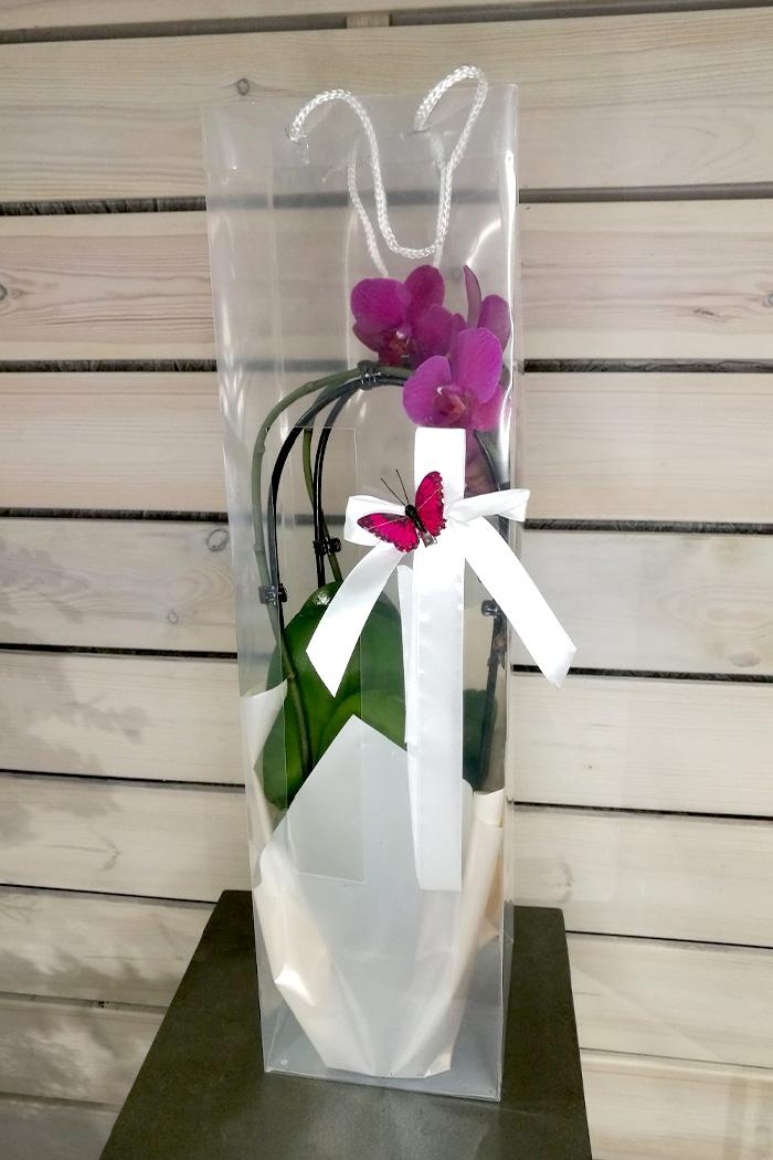 Орхидея дуга в сумочке