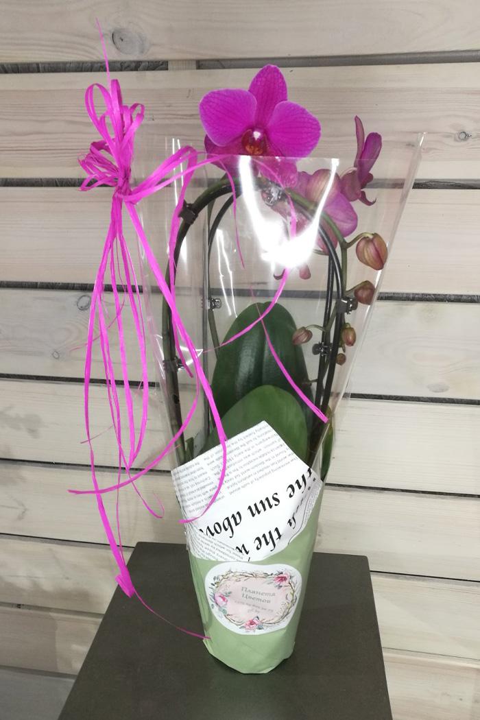 Орхидея дуга в оформлении