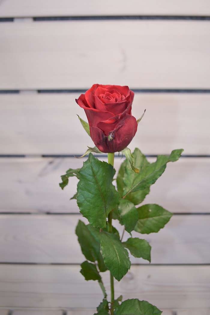 Роза Ред Игл